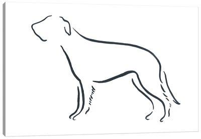 Irish Wolfhound Canvas Art Print