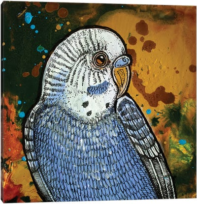 Blue Parakeet Canvas Art Print