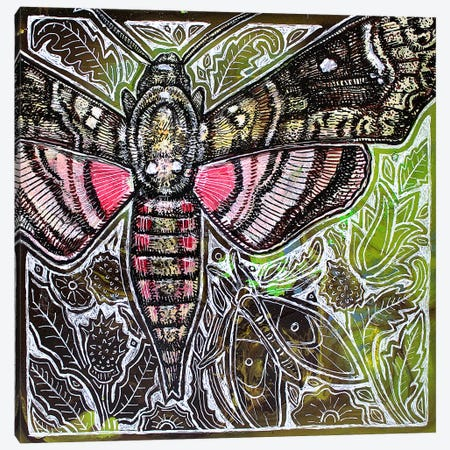 Pink Spotted Hawkmoth Canvas Print #LSH162} by Lynnette Shelley Canvas Wall Art