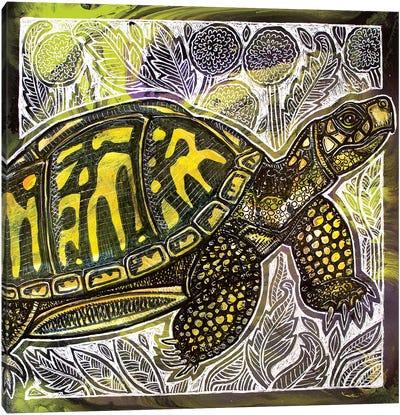 Box Turtle And Dandelions Canvas Art Print