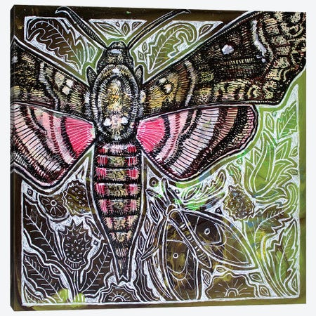 Pink Spotted Hawkmoth Canvas Print #LSH175} by Lynnette Shelley Canvas Art
