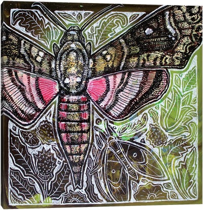 Pink Spotted Hawkmoth Canvas Art Print