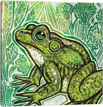 Little Frog Canvas Art Print