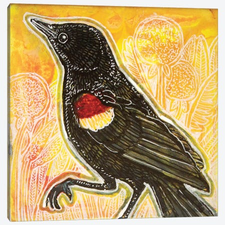 Red-Winged Blackbird 3-Piece Canvas #LSH223} by Lynnette Shelley Art Print