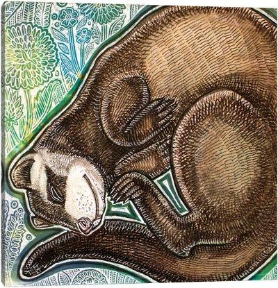 Dreaming Ferret Canvas Art Print