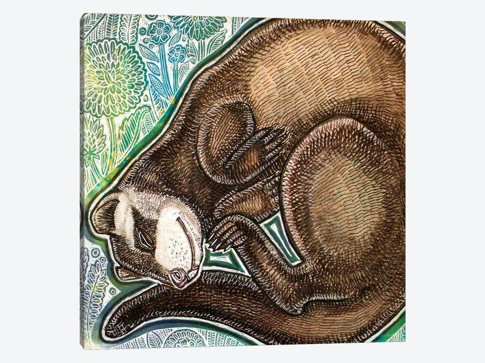 Dreaming Ferret by Lynnette Shelley 1-piece Canvas Wall Art