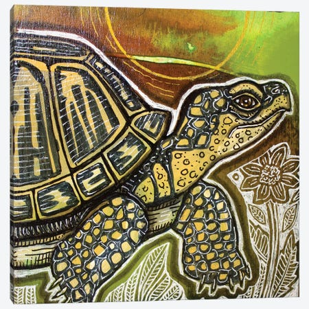 Small Turtle Canvas Print #LSH264} by Lynnette Shelley Canvas Wall Art