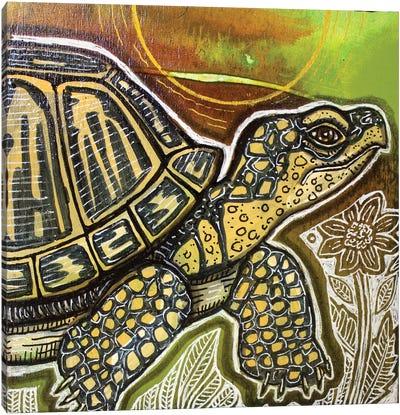 Small Turtle Canvas Art Print