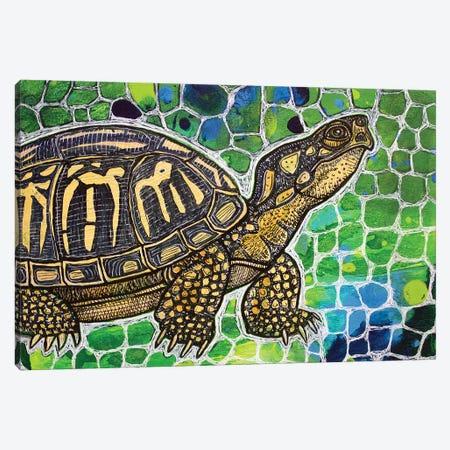 Eastern Box Turtle Canvas Print #LSH28} by Lynnette Shelley Canvas Print