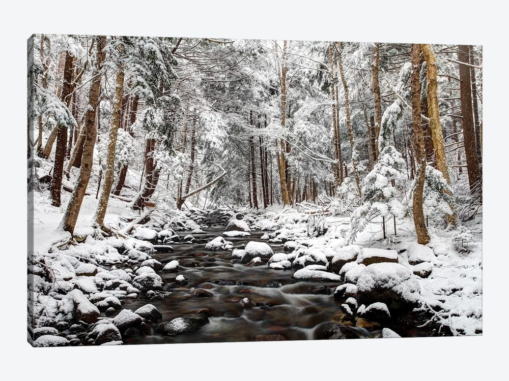 Stream In Winter, Nova Scotia, Canada - Horizontal by Scott Leslie 1-piece Canvas Wall Art