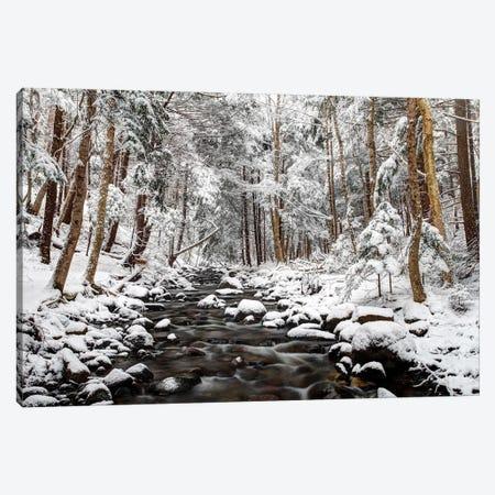 Stream In Winter, Nova Scotia, Canada - Horizontal Canvas Print #LSL13} by Scott Leslie Canvas Wall Art