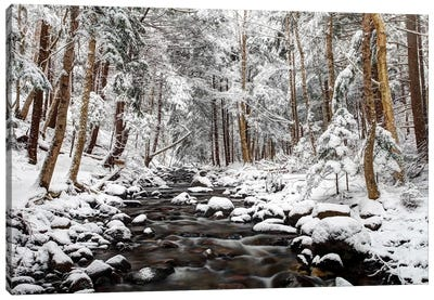 Stream In Winter, Nova Scotia, Canada - Horizontal Canvas Art Print