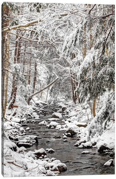 Stream In Winter, Nova Scotia, Canada - Vertical Canvas Art Print