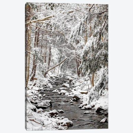 Stream In Winter, Nova Scotia, Canada - Vertical Canvas Print #LSL14} by Scott Leslie Canvas Print