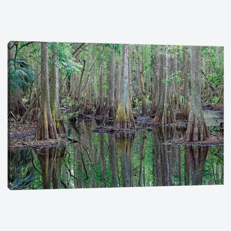 Bald Cypress Trees In Flooded Swamp, Highlands Hammock State Park, Florida Canvas Print #LSL2} by Scott Leslie Canvas Art