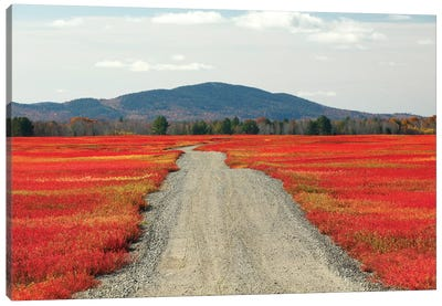 Blueberry Field And Road In Autumn, Deblois, Maine Canvas Art Print