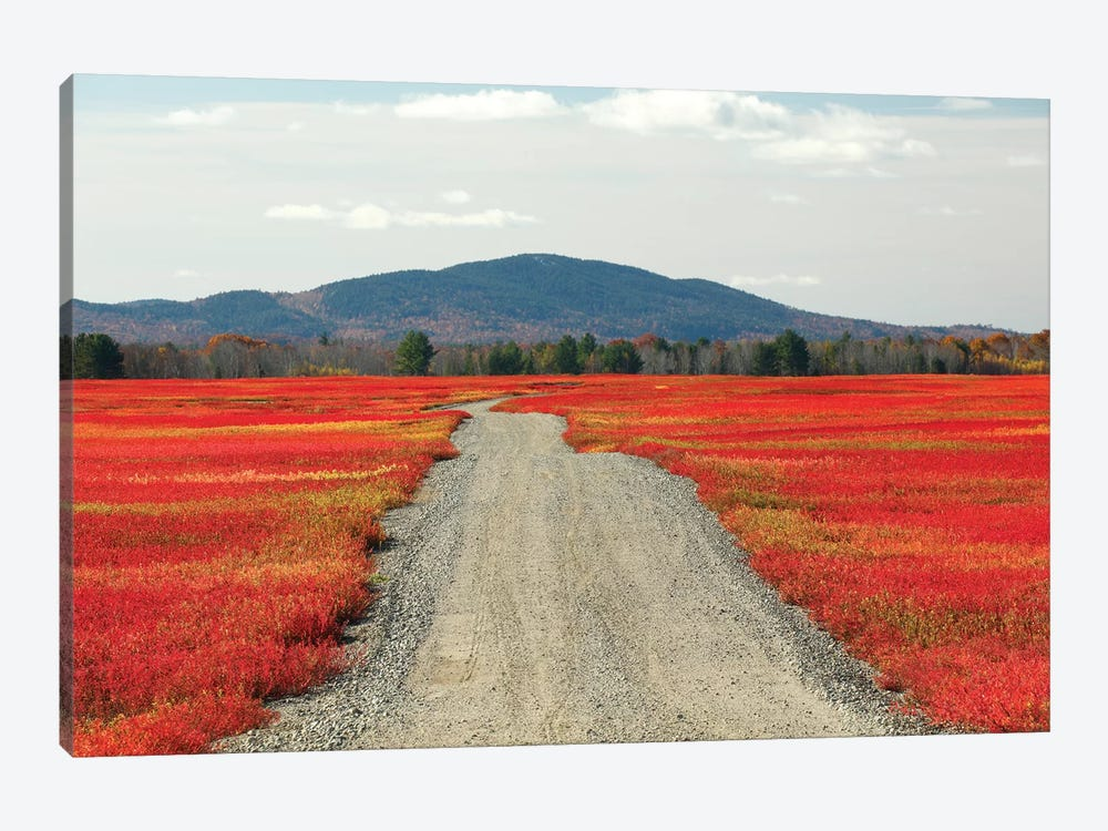 Blueberry Field And Road In Autumn, Deblois, Maine 1-piece Canvas Art