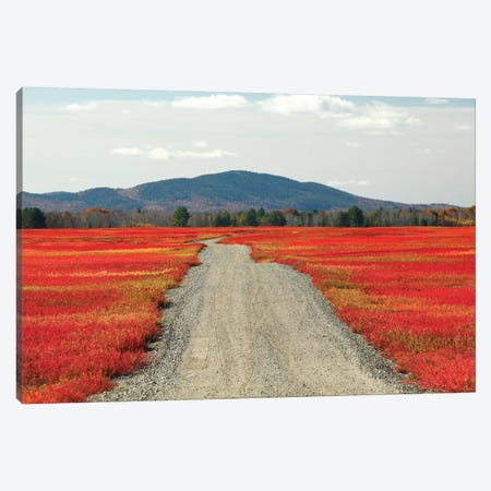 Blueberry Field And Road In Autumn, Deblois, Maine Canvas Print #LSL3} by Scott Leslie Canvas Art