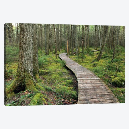 Canadian Hemlock Grove With Boardwalk, Kejimkujik National Park, Nova Scotia, Canada Canvas Print #LSL4} by Scott Leslie Canvas Art Print