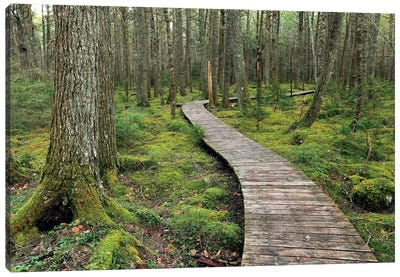 Canadian Hemlock Grove With Boardwalk, Kejimkujik National Park, Nova Scotia, Canada Canvas Art Print