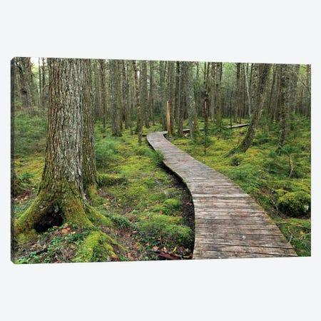 Canadian Hemlock Grove With Boardwalk, Kejimkujik National Park, Nova Scotia, Canada Canvas Print #LSL4} by Scott Leslie Canvas Art Print