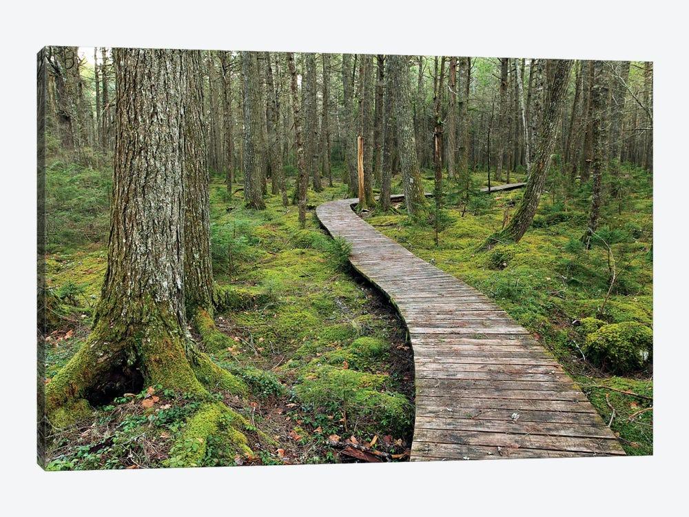 Canadian Hemlock Grove With Boardwalk, Kejimkujik National Park, Nova Scotia, Canada by Scott Leslie 1-piece Canvas Art Print