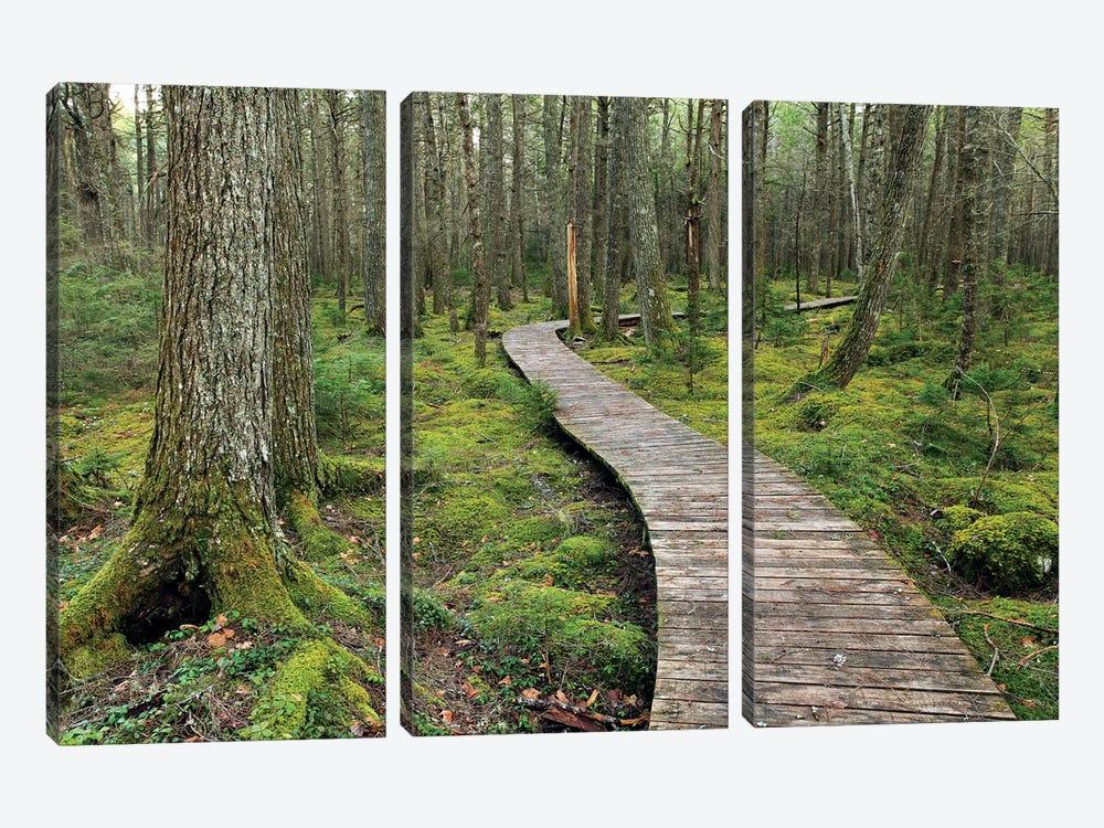 Canadian Hemlock Grove With Boardwalk, Kejimkujik National Park, Nova Scotia, Canada by Scott Leslie 3-piece Canvas Art Print