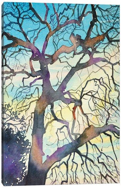 Oak At Red Rock Canvas Art Print