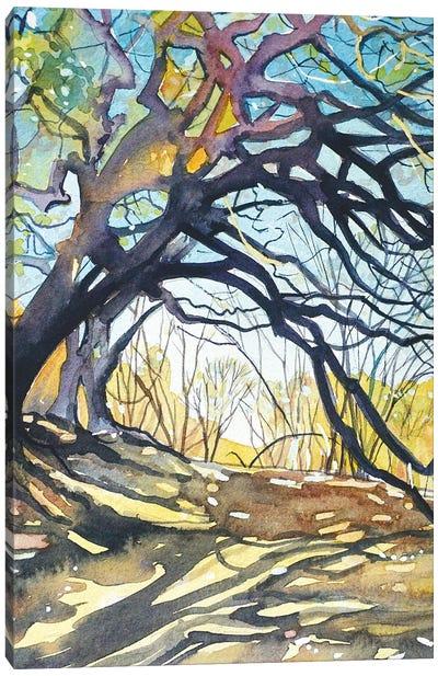Oaks - Paramount Ranch Canvas Art Print