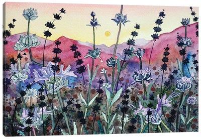Seed Head Sunset Canvas Art Print