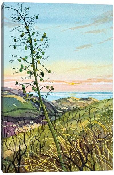 Chaperral Yucca Canvas Art Print