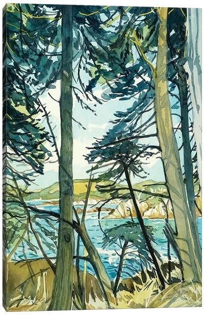 Point Lobos Pines Canvas Art Print