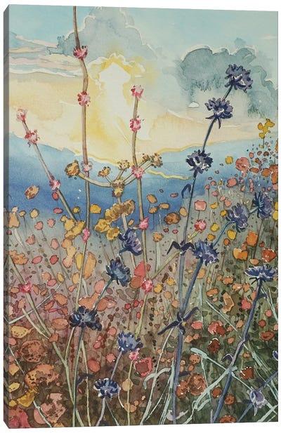 Tuna Canyon Flowers At Sunset. Canvas Art Print
