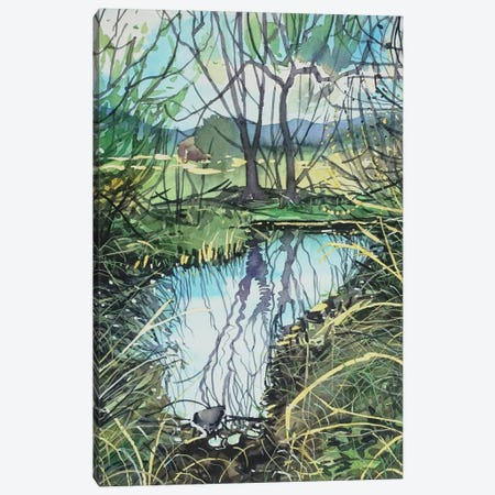 Still Water In Medea Creek Canvas Print #LSM215} by Luisa Millicent Canvas Print