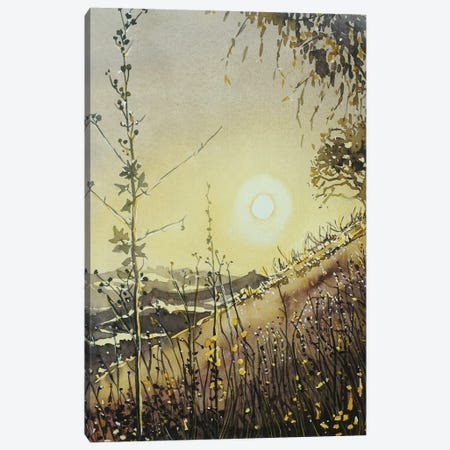 Malibu Creek Evening Glow Canvas Print #LSM227} by Luisa Millicent Canvas Artwork