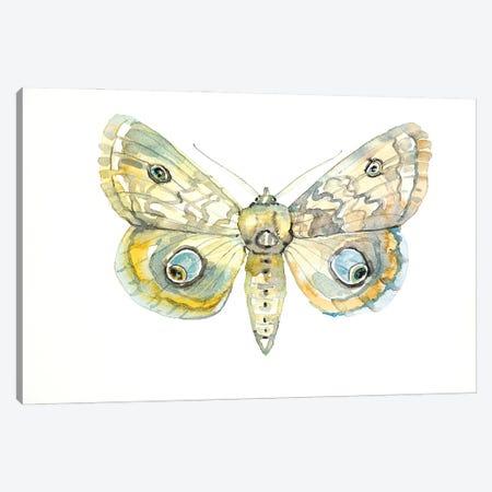 Moth Canvas Print #LSM24} by Luisa Millicent Canvas Print