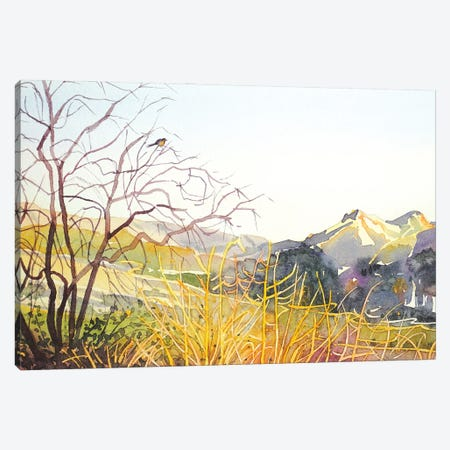 Reagan Ranch Meadow - Golden Hour Canvas Print #LSM66} by Luisa Millicent Canvas Print