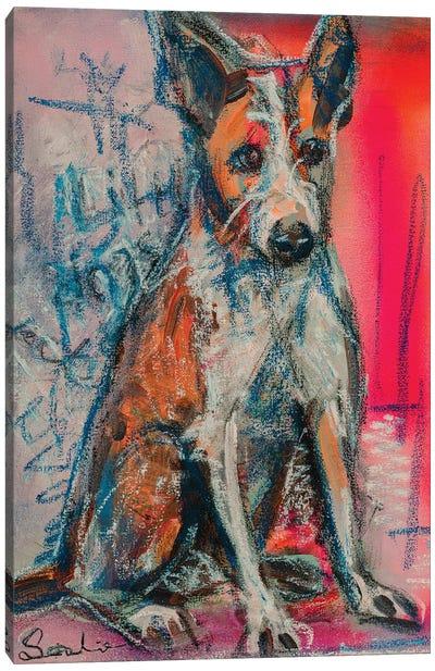 Portuguese Podengo Canvas Art Print