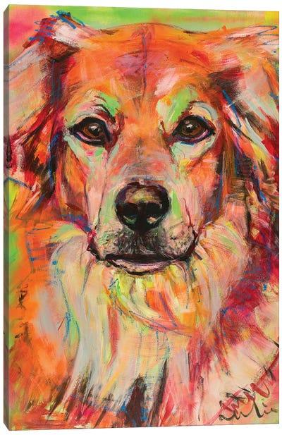 Bernese Mountain X Labrador Portrait Canvas Art Print