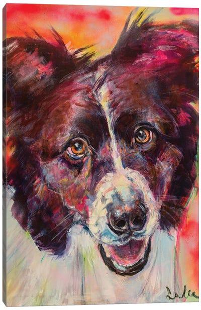 Border Collie Portrait Canvas Art Print