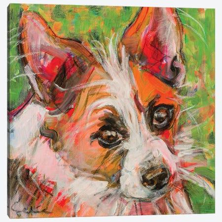 Chihuahua X Jack Russell Portrait Canvas Print #LSR4} by Liesbeth Serlie Canvas Art