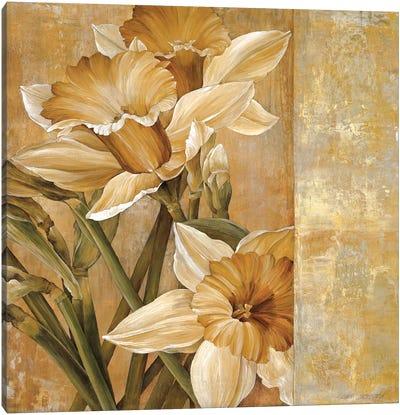 Champagne Daffodils I Canvas Art Print