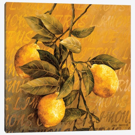 Lemon Branch Canvas Print #LTH25} by Linda Thompson Canvas Print