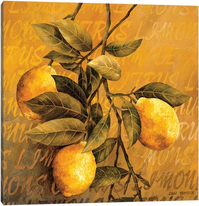 Lemon Branch Canvas Art Print