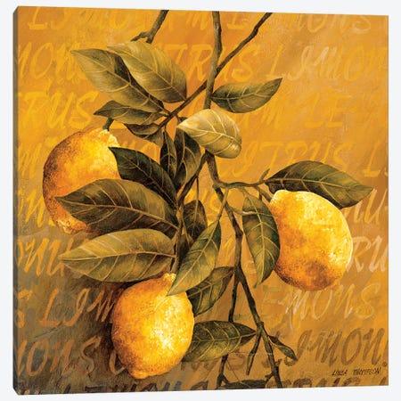 Lemon Branch Canvas Print #LTH25} by Linda Thompson Canvas Print