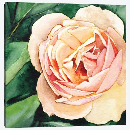 Peach Rose Canvas Print #LTR21} by Christine Lindstrom Canvas Artwork