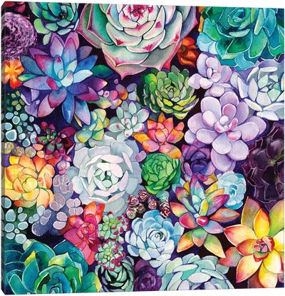 Succulent Garden Canvas Art Print