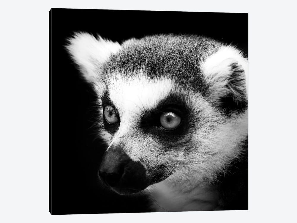Lemur In Black & White by Lukas Holas 1-piece Canvas Artwork