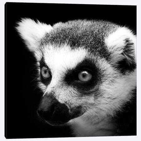 Lemur In Black & White 3-Piece Canvas #LUK10} by Lukas Holas Canvas Print