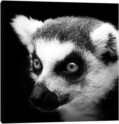 Lemur In Black & White Canvas Art Print
